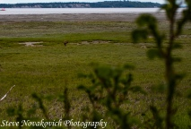 AroundAnchorage_MG_2212